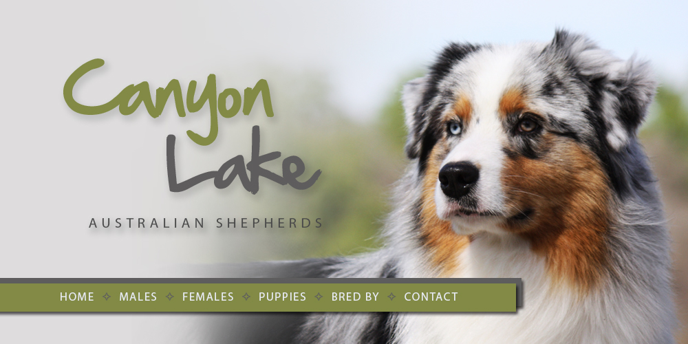 Canyon Lake Australian Shepherds • Welcome